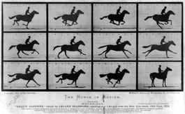 The Horse in Motion by Eadweard Muybridge (1878)